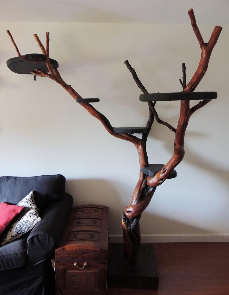 деревья сонник купить